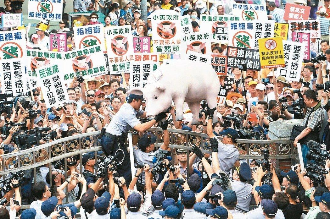 2016年豬農為抗議政府有意開放含萊克多巴胺美豬進口,集結在立法院外抗議。 圖/聯合報系資料照