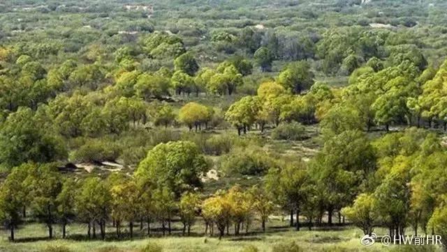 植樹造林的研究4
